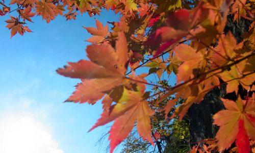 色づいた!小松市荒俣峡の紅葉に行ってみた。