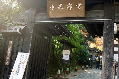 京都・紅葉の名所!晩秋の常寂光寺に行ってきた。