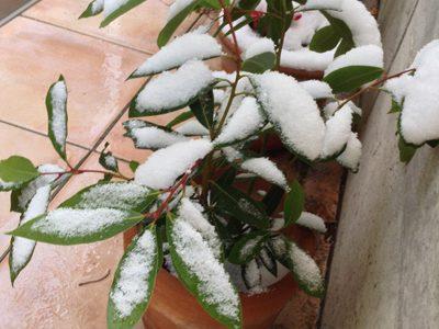今年初めての、白い冬。
