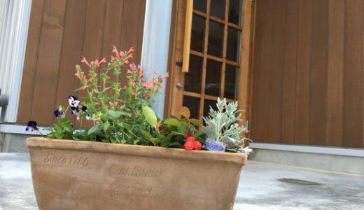 今日は休日だったので松任店の玄関先に置ける鉢植えを調達。