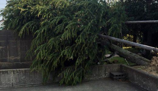 えらいこっちゃ!!自宅の木が倒れた!