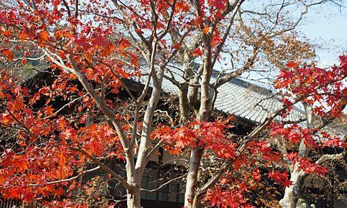 京都でおすすめの紅葉スポットを教えてください。