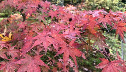 行って来ました!京都嵯峨野の宝筐院。