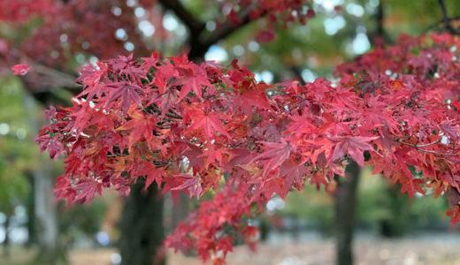 東山・南禅寺の紅葉が見ごろでした。