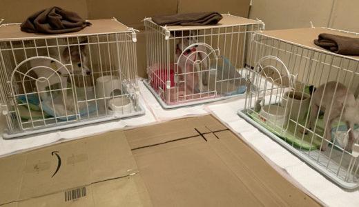 帰省していた長女とわんこ達が、自宅の大阪へと帰っていきました。わん!
