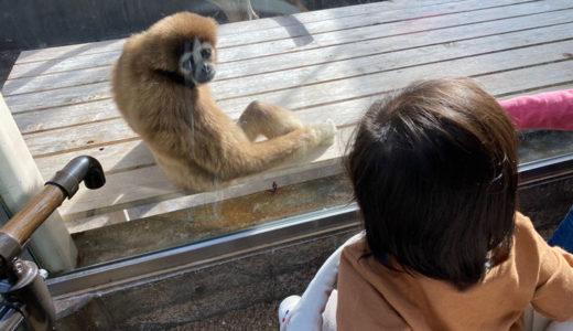 はじめての石川動物園が子供以上に楽しかったです笑