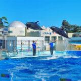 松島水族館でイルカに大興奮!初めての水族館デビュー。